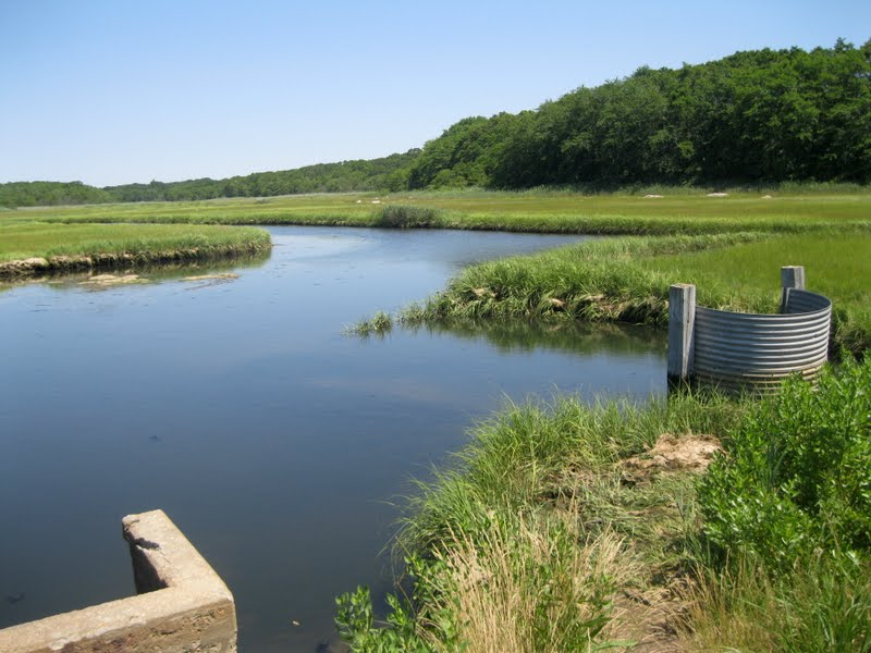 Impoundment 1 at Barn Island supports healthy plant community